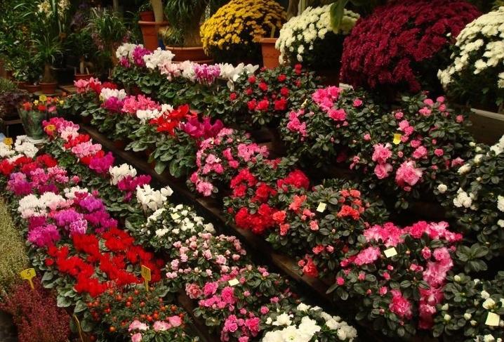 Marchés aux fleurs 1